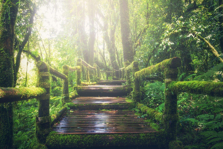 Wege aus dem Dschungel